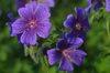 Flowers001_2