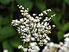 Flowers003